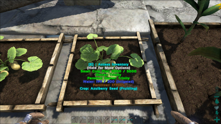 Azulberries can be grown in any size of crop plot in Ark. Here we see Azulberries growing in a small crop plot.