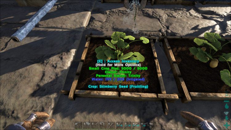 Stimberries can be grown in any Crop Plot in Ark. In this image the Simberries are growning in a Small Crop Plot.